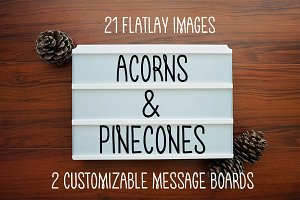 ACORNS & PINECONES