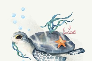 Illustration of turtle
