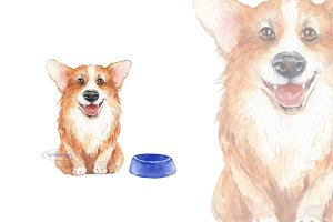 Corgi. Watercolor sketch
