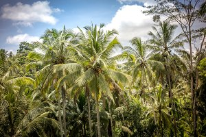 Green tropical landscape with blue sky. Bali island, Indonesia.