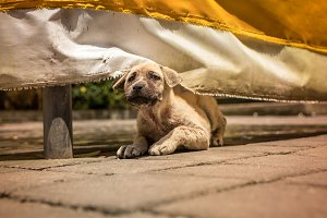 Cute puppy balinese dog relaxing in Tirta Empul Temple, Bali island, Indonesia.