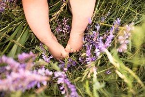 Legs of little baby boy against green meadow with purple flowers