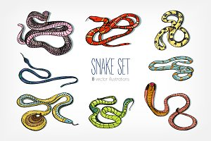 Collection of beautiful snakes