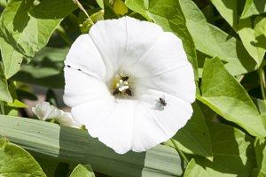 flower color white
