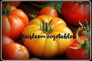 Heirloom variety tomatoes on rustic table. Colorful tomato - red,yellow , orange. Harvest vegetable cooking conception