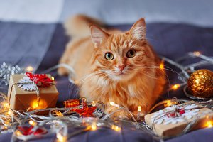 Cute ginger Christmas cat