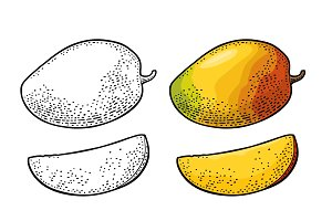 Whole and slice mango. Vector color vintage