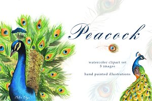 Watercolor Clipart - Peacock
