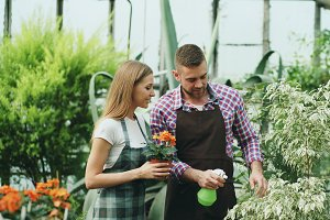 Attractive couple work in greenhouse. Man gardener in apron watering plants and flowers with garden sprayer while his girlfriend talking to him