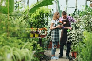 Attractive couple work in greenhouse. Woman gardener in apron watering plants with garden sprayer while her husband talking to him