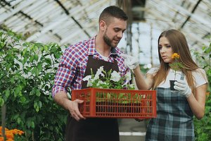 Young attractive florists couple in apron working in greenhouse. Cheerful man walking with box of flowers and talks woman loosen plant