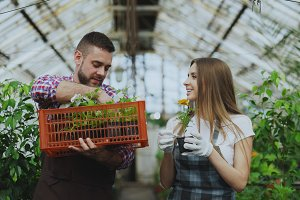 Young attractive florists couple in apron working in greenhouse. Cheerful man with box of flowers talking woman loosen plant