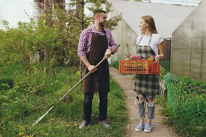 Attractive couple work near greenhouse. Man gardener in apron collect garbage in garden while his wife talking him holding box with flowers