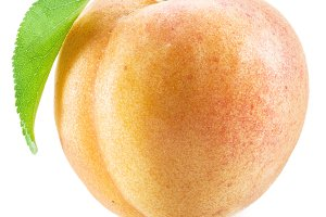 Apricot fruit with leaf