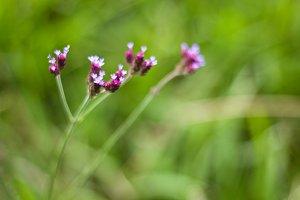 Multiple Purple Flowers