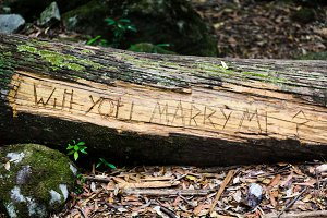 """Will You Marry Me?"" Log"