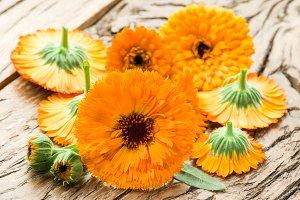 Calendula flowers.