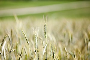 green cereals, close-up