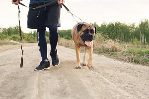 Closeup of young sporty man walking with his bullmastiff dog outdoor at nature after workout training