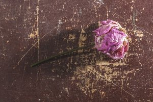 Withered flower on wooden background