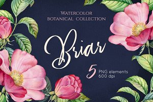 Watercolor Botanical Briar Flowers