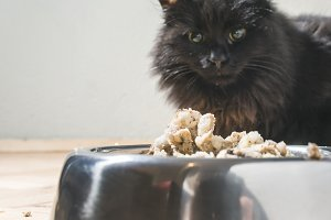 Black cat eating in the floor