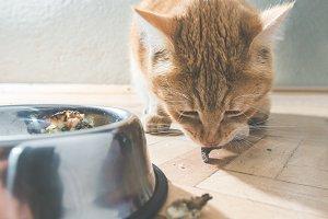 Orange cat eating in the floor