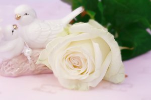 gentle love blurred background white rose figurines pigeons with selective focus Mother's Day
