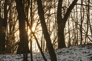 sun sunrise winter
