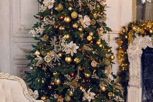 Christmas Golden spruce stands in interior