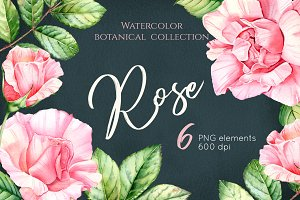 Watercolor Botanical Rose Flowers