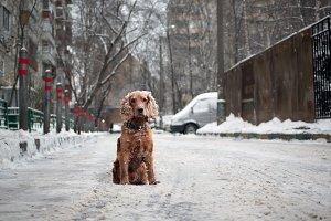Sad dog on the street. Winter, snow,