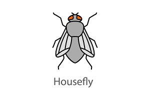 Housefly color icon