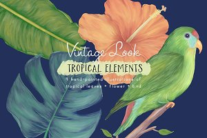 Hand-painted Tropical Illustrations