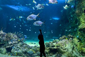 Happy kid observing fishes at a large aquarium
