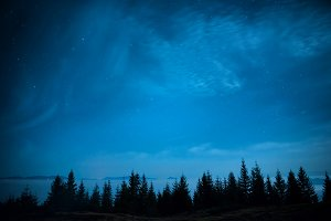 Forest of pine trees under night sky