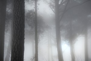 Mystery misty forest