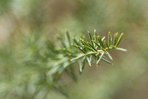 Plant. Macro