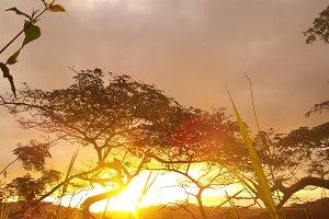 Golden Hour Trees