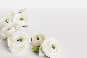 White Ranunculus Neutral Stock Photo