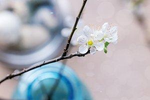 Blossom branch