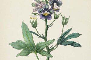 Plant illustration (PSD)