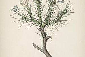 Plant illustration(PSD)