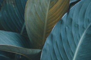 Dark leaves texture