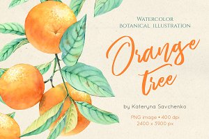 Orange Tree - Botanical Watercolor