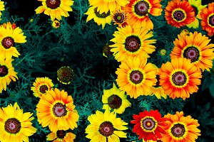 Yellow Floral background.
