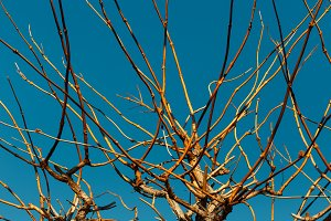 Yellow Branches Of A Tree Against A