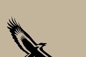Vector of eagle design. Bird
