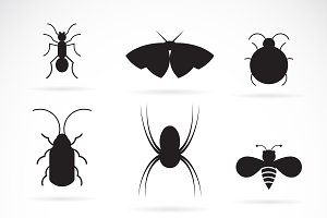 Vector of insects group. Icon.
