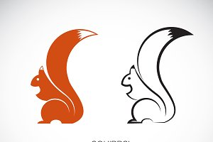 Vector of squirrel design. Animal.